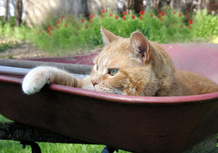 Oakville Humane Society Lost Cat