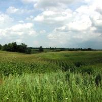 Rolling Ontario Fields