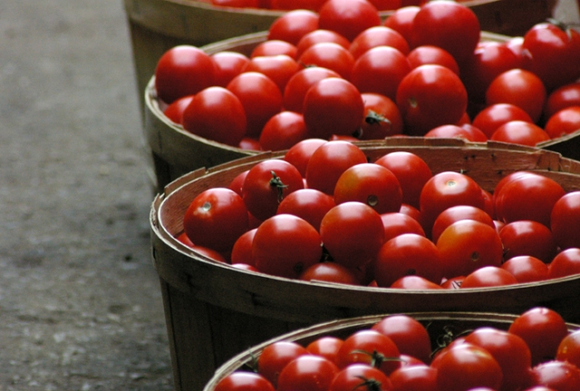 Bushels of Market Tomatoes