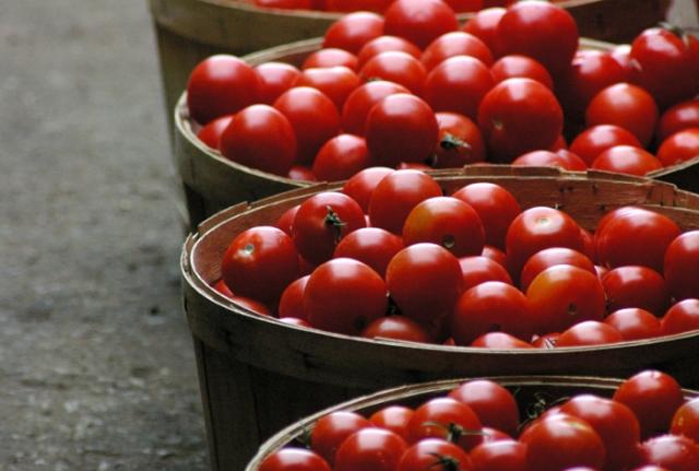 Bushels of Market Tomatoes