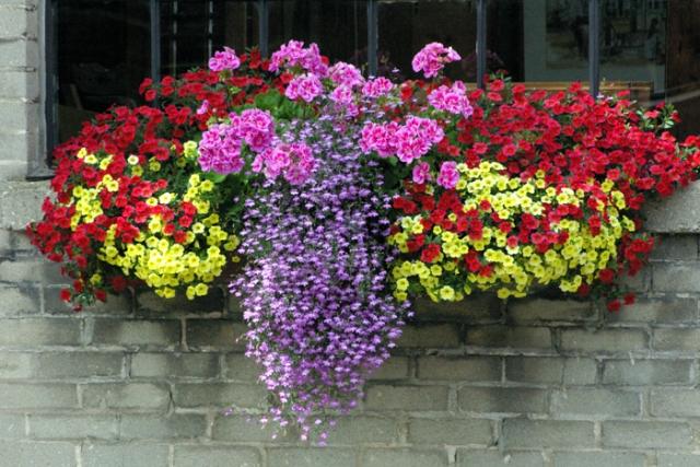 Window Box of Flowers
