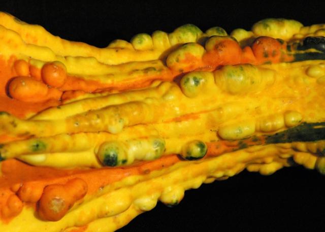 Colourful gourd