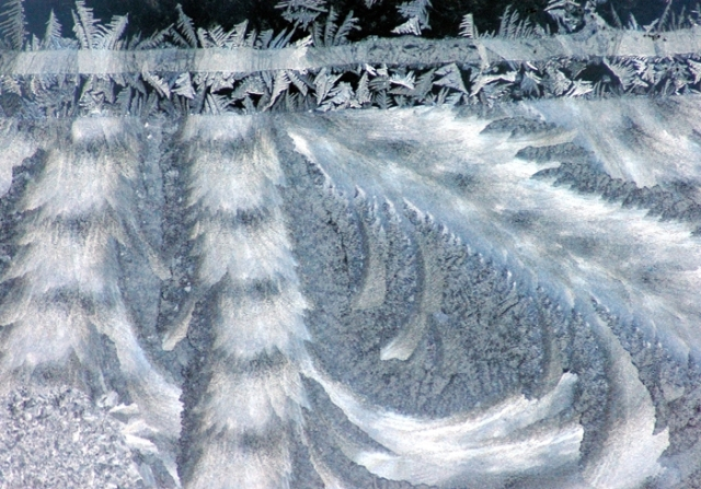 frost makes a pattern resembling fur and feathers