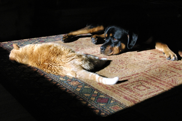 Dog and cat lying in the sun