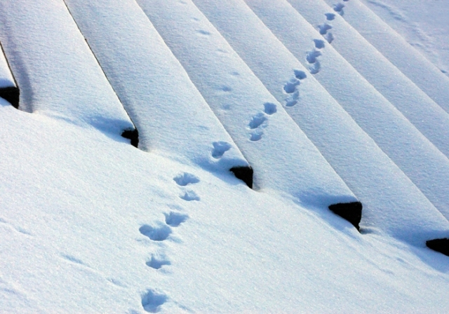 Bird Tracks in the snow