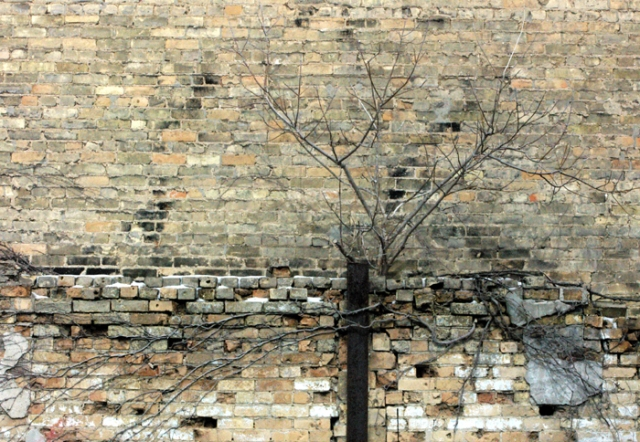 Tree growing between brick