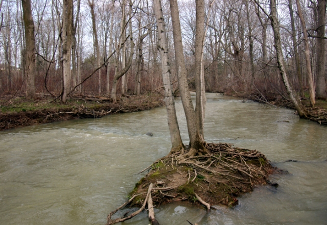 Tree in a high water river