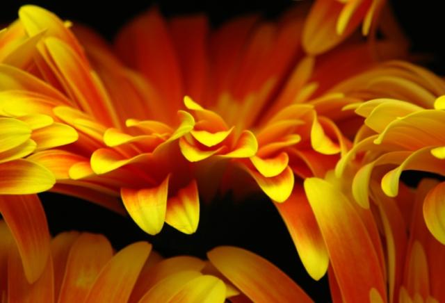 Striking Orange