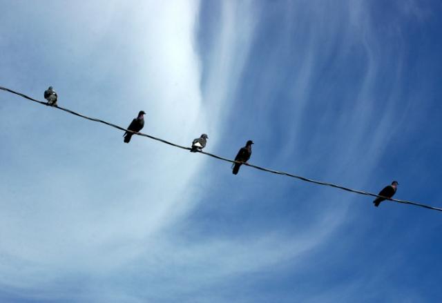 Five Pigeons