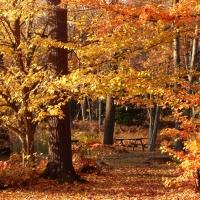 Muskoka Fall Picnic