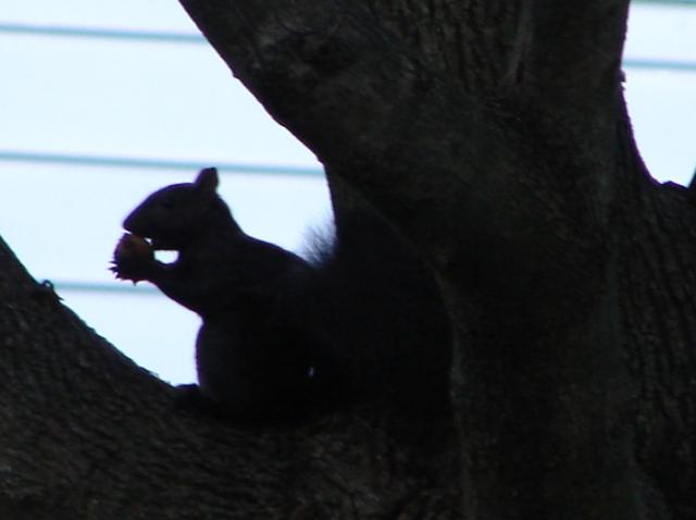 Squirrel n' Nut