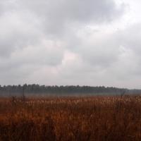 Muskoka Fall Field