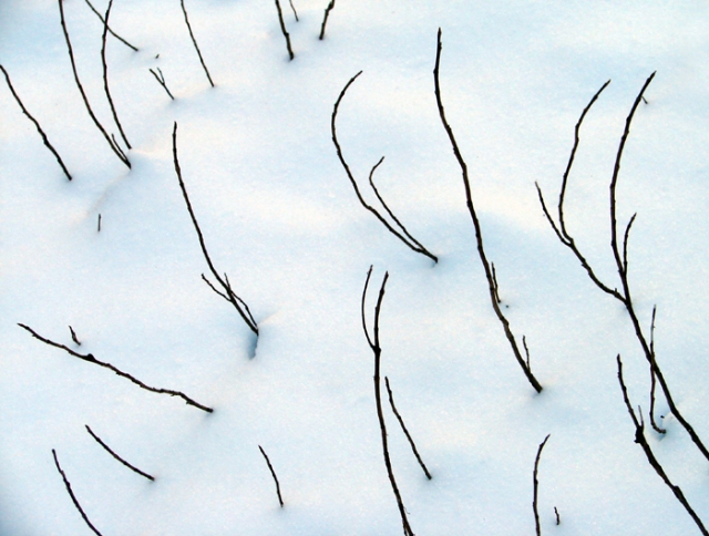 Stems in Snow