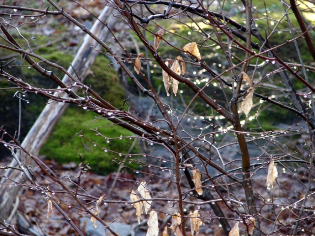Spring Woods 1