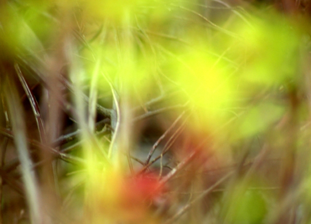 Abstract Spirea