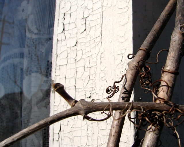 Vine on White