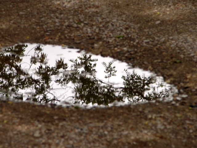 Spring Tree Reflection
