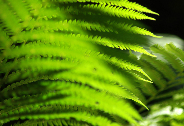 Layers of Fern
