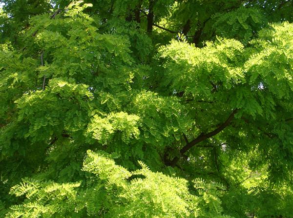 Shades of Summer Green