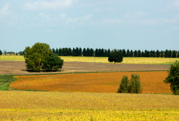 Fields of Gold and Bronze