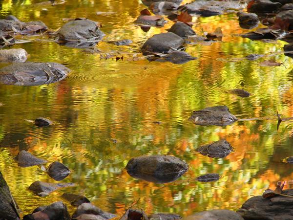 Fall Creek Reflection
