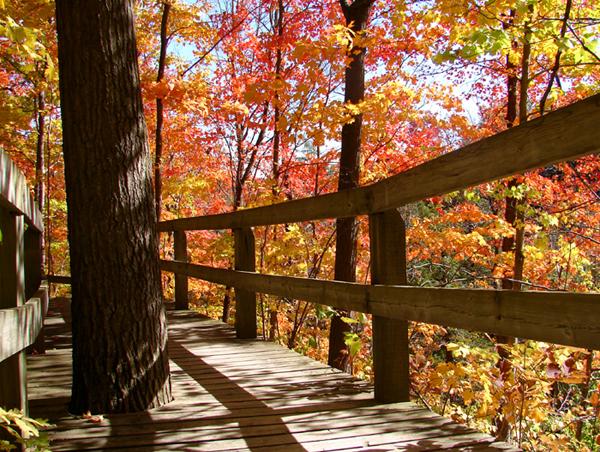 Treed Boardwalk