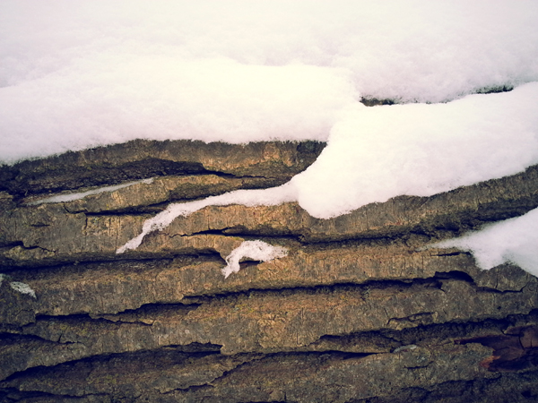 Snow Covered Log