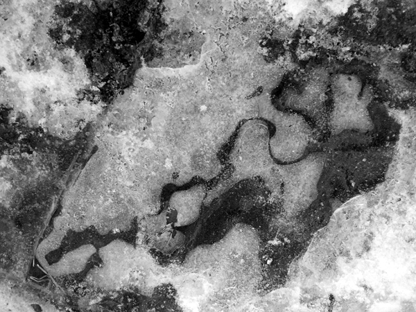 Icy on a grey piece of shale creates interesting patterns... just watch your step.