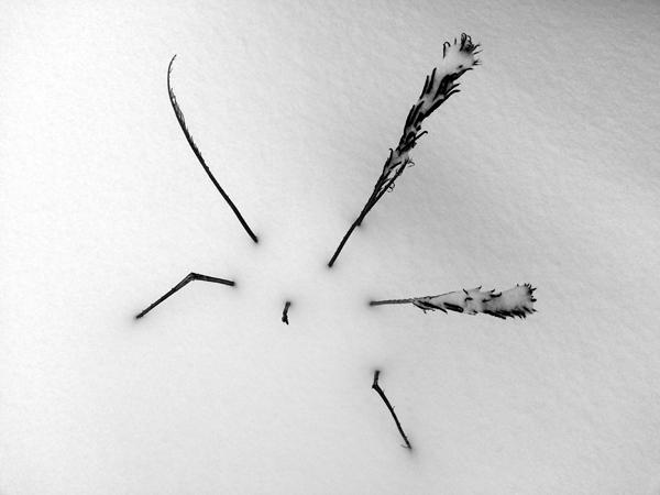 Winter Fern II