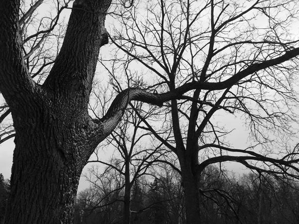 Winter Park Maples