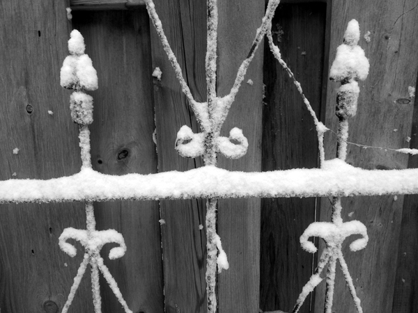 Winter Trellis