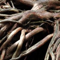 Sensual Roots