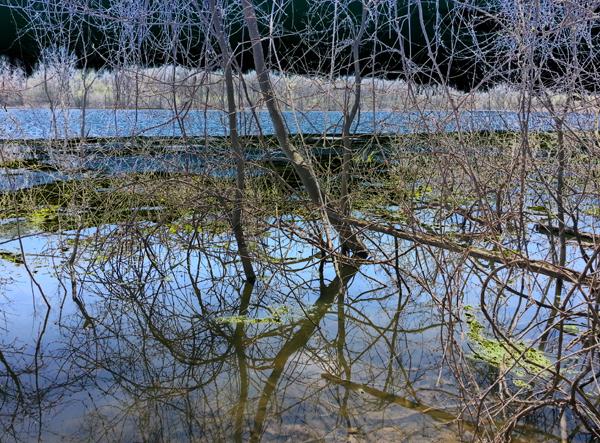 Tangled Pond