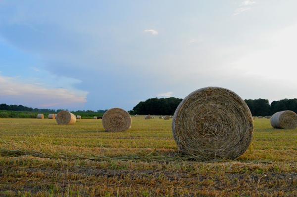 July Field View