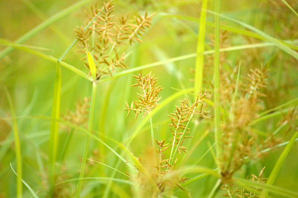 Graphic Grass