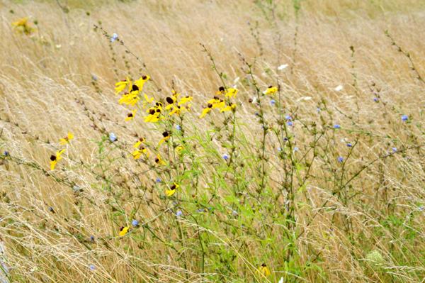 Meadow Wind