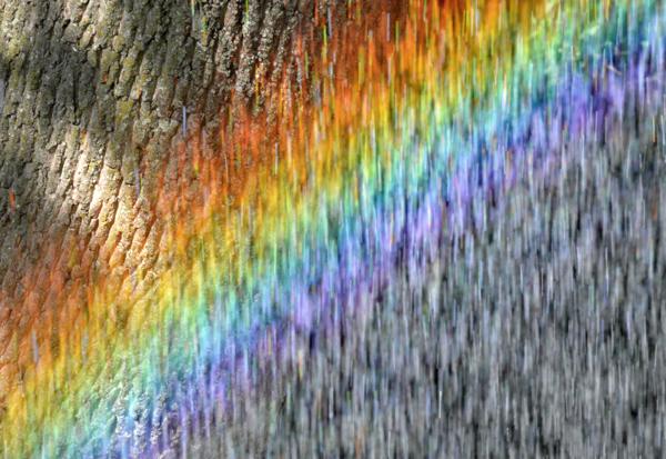 Rainbow and Bark
