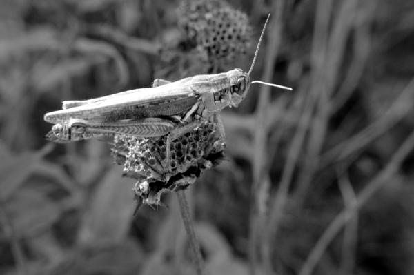 Hopper of Grass
