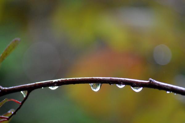 September Rain II