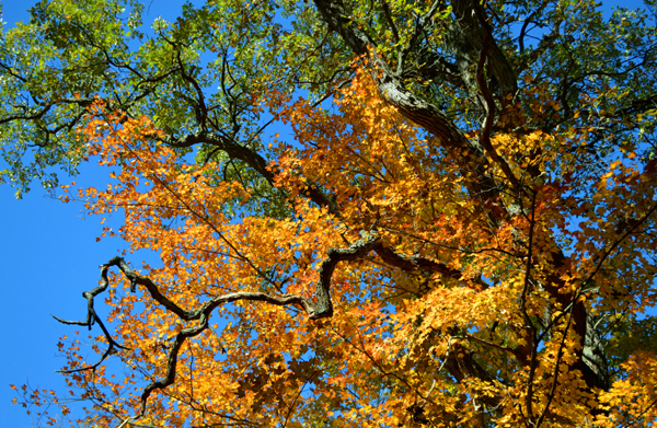 Trees are changing colour