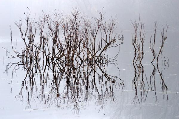 Pond Duality