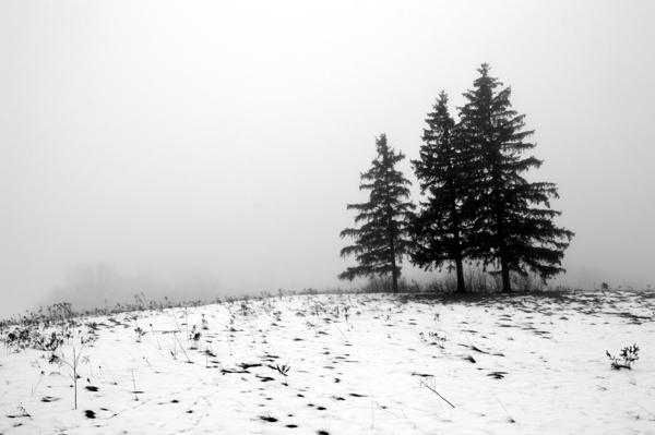 View 3 - Three Trees