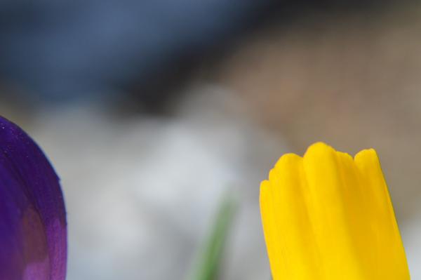 Spring Buddies