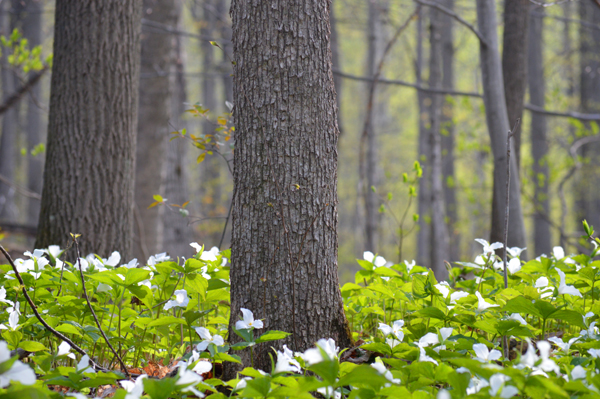 Trunks and Trillium