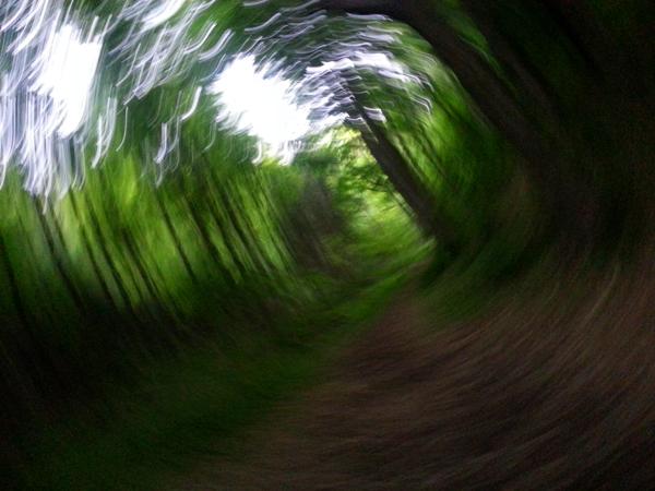Swirling Woods