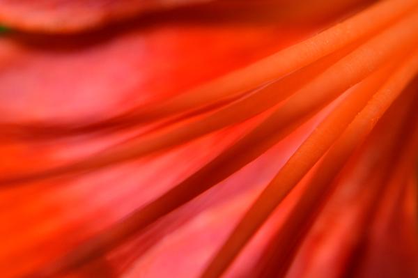 Lily Glow