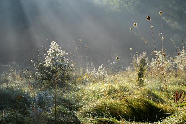 Magical Fall Field