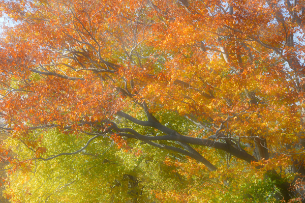 Bright Woods