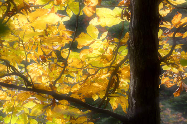 October Gold