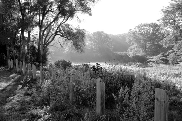 Field of Morning Light